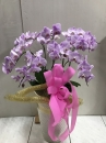 蘭花盆栽01