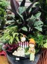 室內小盆栽14(001)
