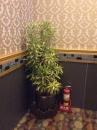 室內盆栽10