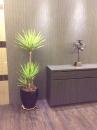 室內盆栽15