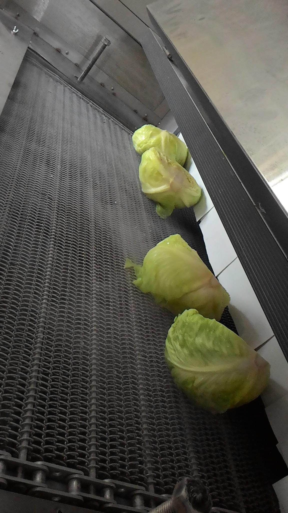 急速冷凍 高麗菜 2.jpg