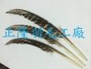 飛禽羽毛翅_(孔明扇~羽毛扇)
