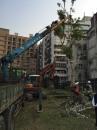 慈濟醫院移樹工程 (4)