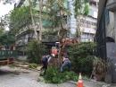 慈濟醫院移樹工程 (2)