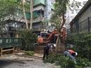 慈濟醫院移樹工程