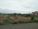新屋區1500坪抓樹木林雜草整地工程