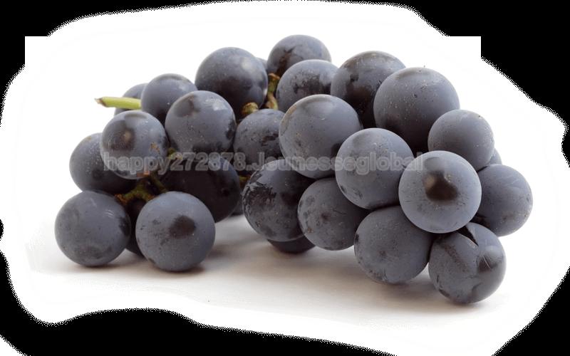 grapes-1.png