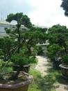 高雄園藝 (5)