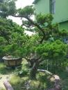 高雄園藝 (6)