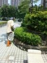 高雄園藝除草 (3)