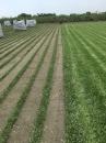 巴西地毯草批發