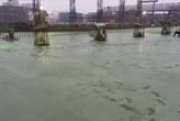 整體粉光綠色金鋼砂1m2/5kg.jpg