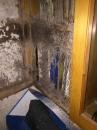 久未移動的書櫃形成白蟻巢穴