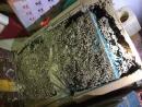 白蟻食用後的碎屑