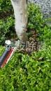 花園土壤白蟻防治
