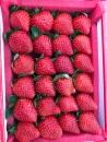 有機草莓精緻禮盒裝(特級)