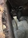 疏通廢水管路