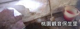 桃園觀音0821.jpg