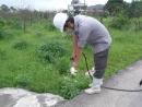 093 紅火蟻防治巢穴灌注