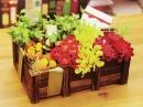 中秋節盆花 (2)