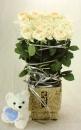 盆花 (6)