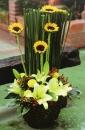 盆花 (7)