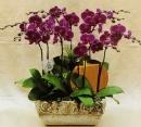 蘭花組合盆栽 (3)