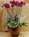 蘭花組合盆栽 (5)