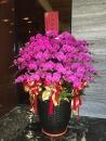 蘭花組合盆栽(12)
