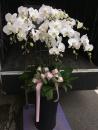 蘭花組合盆栽(13)