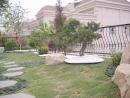 花園造景 (2)