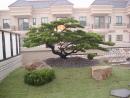 花園造景 (3)