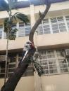 樹木修剪 (2)