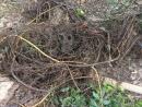 水溝樹根阻塞