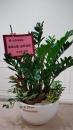 A015--金錢樹