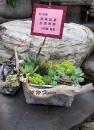 A019--多肉植物