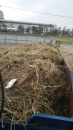 南投廢木材回收 (5)