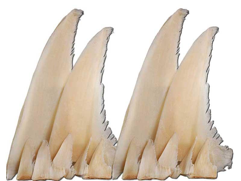 魚翅乾貨 (4).jpg