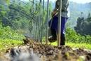 乾坤有機生態休閒農場22
