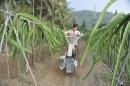乾坤有機生態休閒農場23