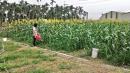 中原世紀休閒農場7