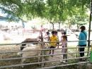 中原世紀休閒農場13