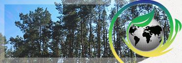 環保棧板.jpg