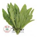 新興小尖葉萵苣