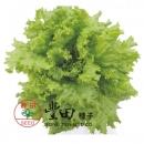 美國縐葉萵苣6045