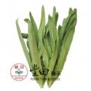 翠香油麥菜