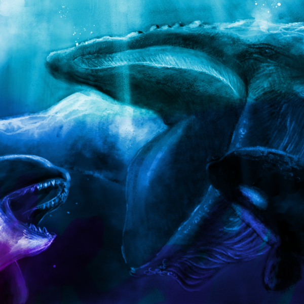 シロナガスクジラ対シャチの群