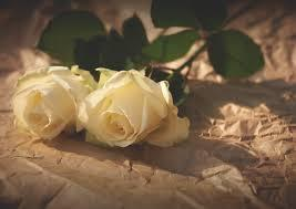 「大切な人へ贈るバラ」(生花orプリザーブドフラワー)&「はまみらい折り紙」