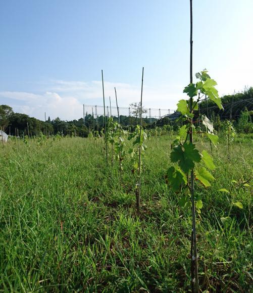 北九州に新たな食文化を!!「汐風香るワイン畑プロジェクト」