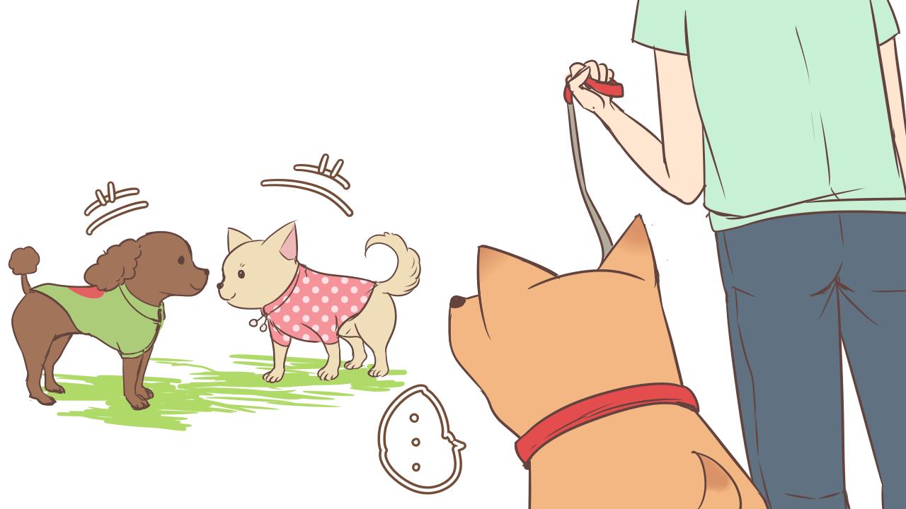 大型犬だと可愛い服がない…
